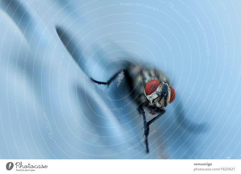 Nahaufnahme einer Fliege Tier Flügel sitzen Biologie Wanze Auge Insekt Schädlinge Farbfoto Außenaufnahme Detailaufnahme Makroaufnahme Menschenleer Morgen