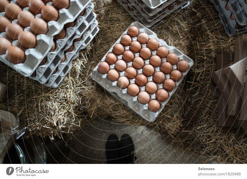 Frühstücksei Lebensmittel Eierschale Eierkarton Eierpaletten Ernährung Essen Bioprodukte Vegetarische Ernährung Diät Fuß frisch Gesundheit viele Völlerei