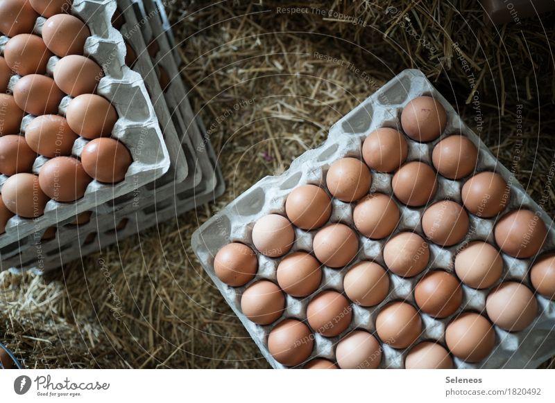 Eier Lebensmittel Eierschale Eierkarton Eierpaletten Ernährung Essen Frühstück Bioprodukte Vegetarische Ernährung frisch Gesundheit Stroh Ostern Bauernhof