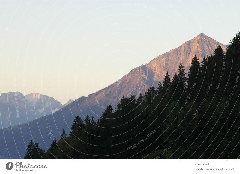 Bergblick am Morgen ruhig Ferien & Urlaub & Reisen Berge u. Gebirge Natur Landschaft Sommer Herbst Schönes Wetter Nadelbäume Alpen Niesen Gipfel Schweiz