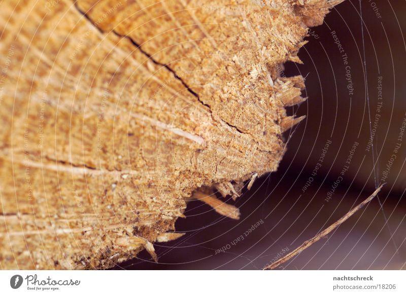 Holzscheit Baum Ast Maserung Splitter Brennholz