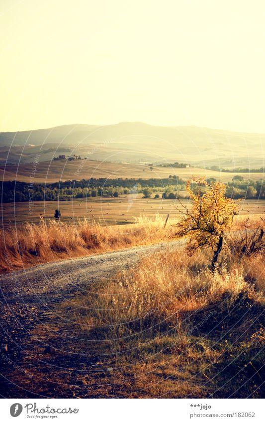 sera oro. Natur Sonne Pflanze Sommer Ferien & Urlaub & Reisen gelb Sonnenuntergang Bewegung Wege & Pfade Wärme Landschaft hell Stimmung Feld gold Sträucher