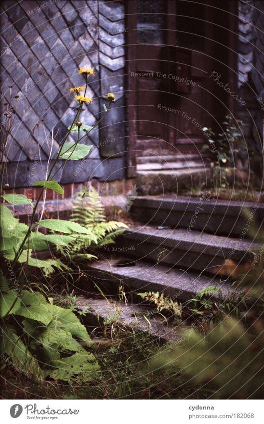 Vor verschlossener Tür Natur schön ruhig Haus Einsamkeit Leben Wand Garten träumen Traurigkeit Mauer Tür Umwelt Zeit Perspektive Treppe