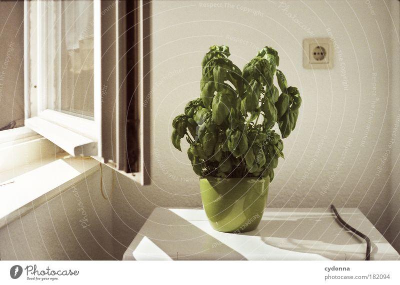 pflanzen sonniger standort awesome geranien lieben. Black Bedroom Furniture Sets. Home Design Ideas