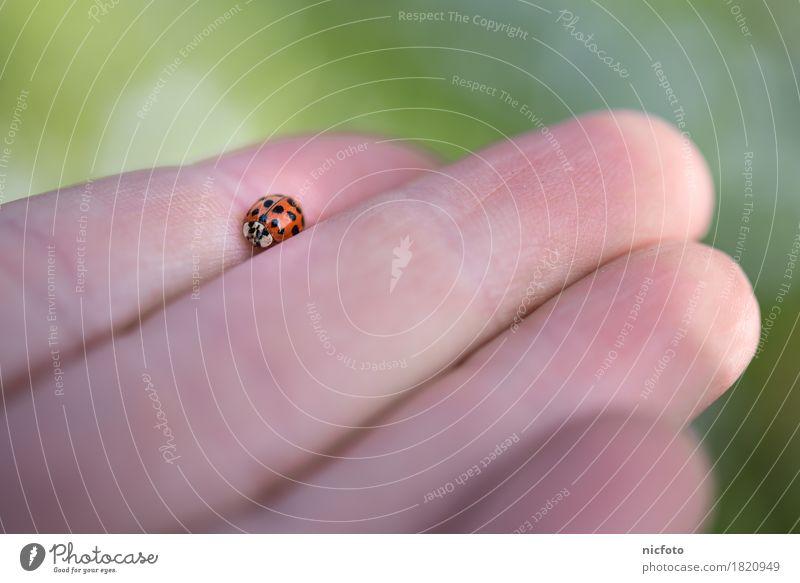 Käfer landet auf großer Hand Glück Natur Tier 1 Freundlichkeit Wärme grün rot schwarz Tierliebe ruhig Marienkäfer Punkt Glücksbringer Hilfsbereitschaft Pause
