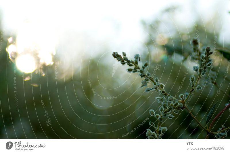 Herbstfänger Natur Himmel grün Pflanze Blatt dunkel Blüte Bewegung Luft Stimmung glänzend Umwelt gold abstrakt Wachstum