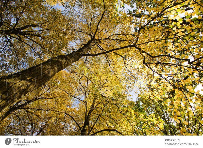 Goldener Dings Baum Blatt Herbst gold hell Sonne Park Baumstamm Ast Zweig goldener herbst Herbstlaub Wald Laubwald Schönes Wetter