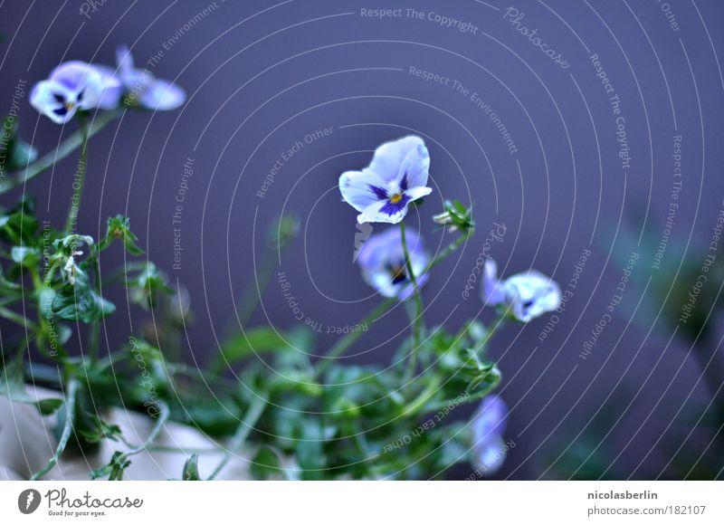 you're gonna miss me when i'm gone on a night just like tonight Natur schön weiß Pflanze Blüte Glück Zufriedenheit warten Umwelt Fröhlichkeit violett dünn