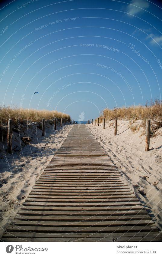 Weg zur Ostsee Natur Sonne Strand Landschaft Umwelt Meer Fröhlichkeit Sträucher genießen Schönes Wetter Optimismus Wolkenloser Himmel