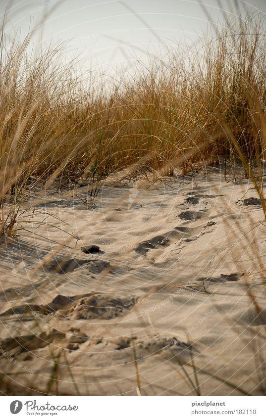 Spuren im Sand Natur Strand Erde Sträucher Ostsee kuschlig diszipliniert