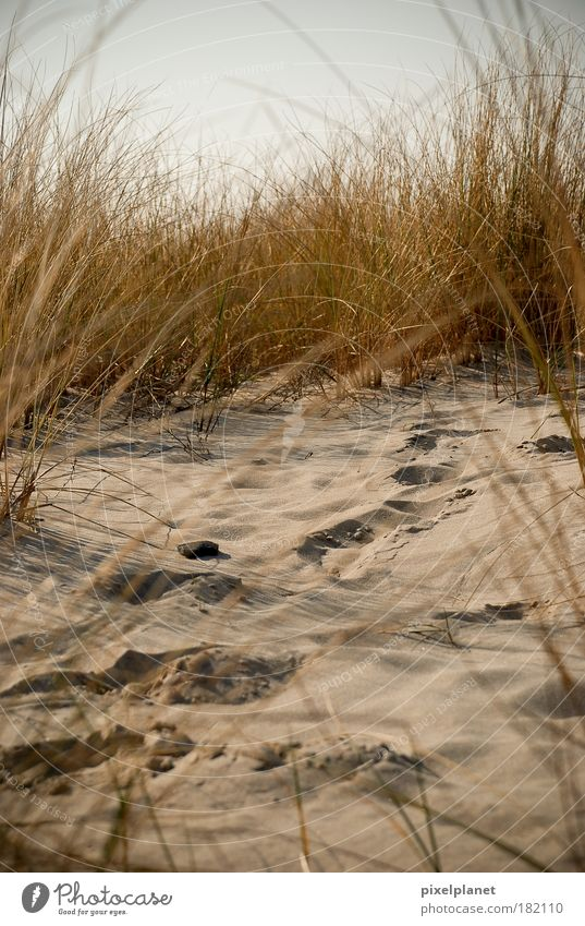 Spuren im Sand Natur Strand Sand Erde Sträucher Ostsee kuschlig diszipliniert