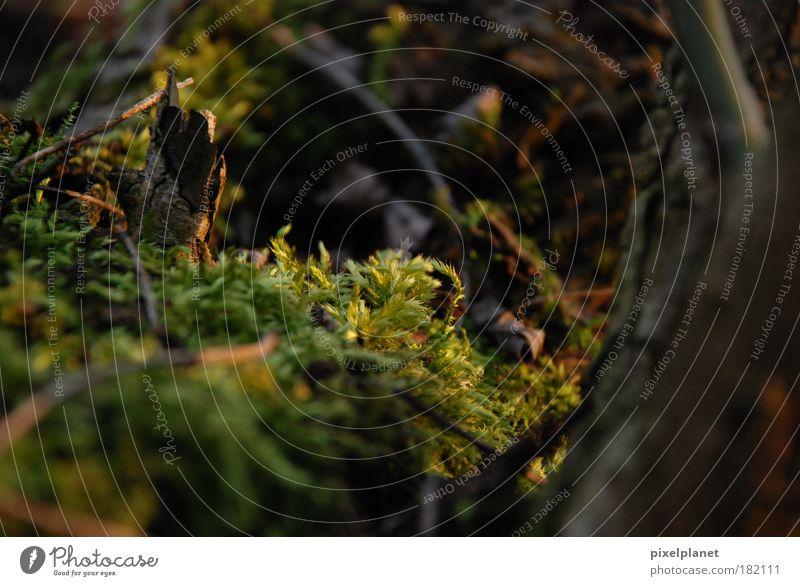 Moos Natur Baum Pflanze Umwelt Herbst Warmherzigkeit Moos vernünftig