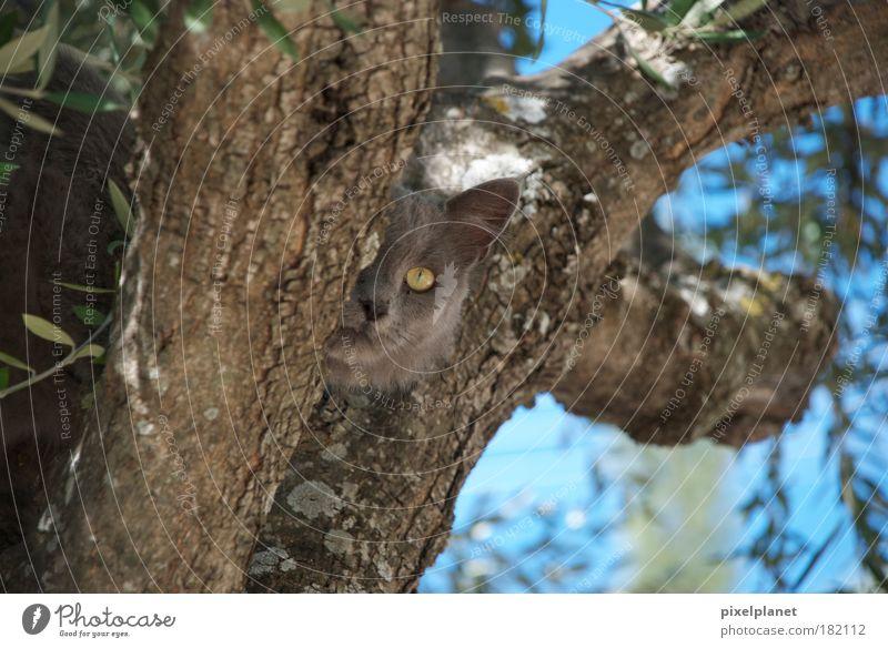 Griechische Katze Baum Tier süß Coolness natürlich Haustier listig
