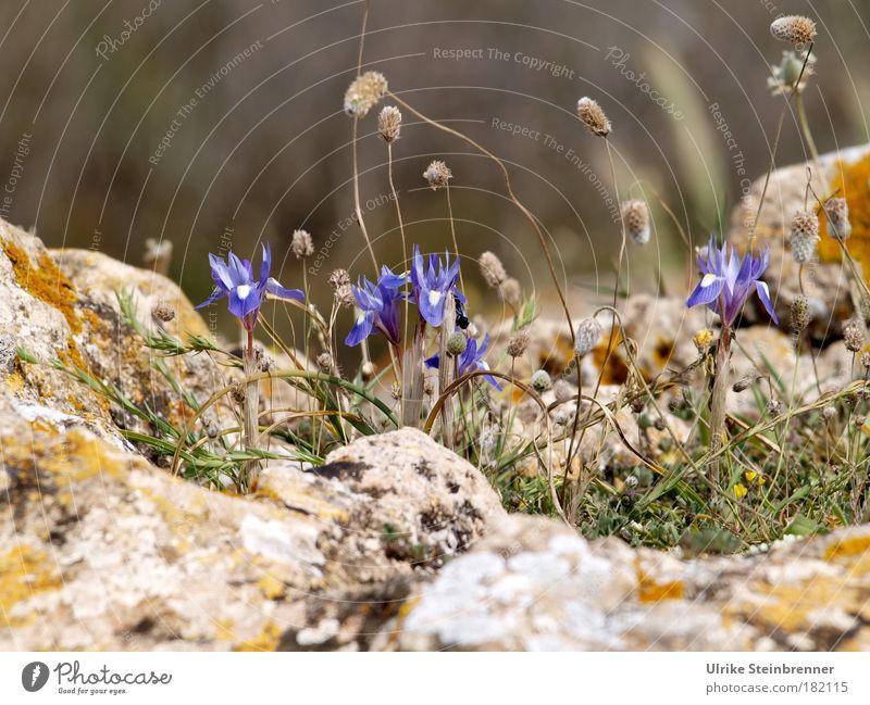 Wildwuchs Natur Ferien & Urlaub & Reisen blau Pflanze schön Umwelt Frühling natürlich Küste Stein Felsen wild Wachstum Idylle Erde ästhetisch