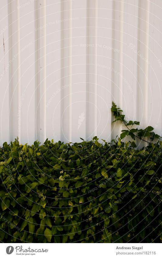 Liniert blattiert Natur weiß grün Pflanze Wand Gebäude Mauer Fassade Design Sträucher einfach Bauwerk Zweig Halle Gegenteil