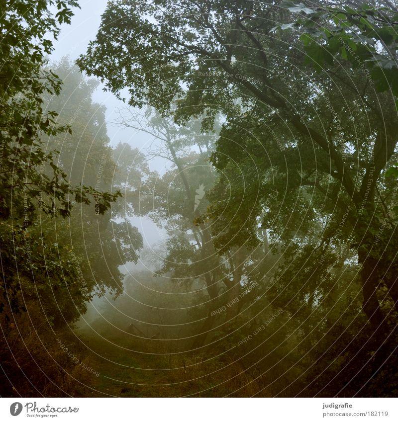 Morgens Farbfoto Außenaufnahme Morgendämmerung Umwelt Natur Pflanze Herbst Klima Nebel Baum Sträucher Wald dunkel gruselig natürlich Romantik Wege & Pfade
