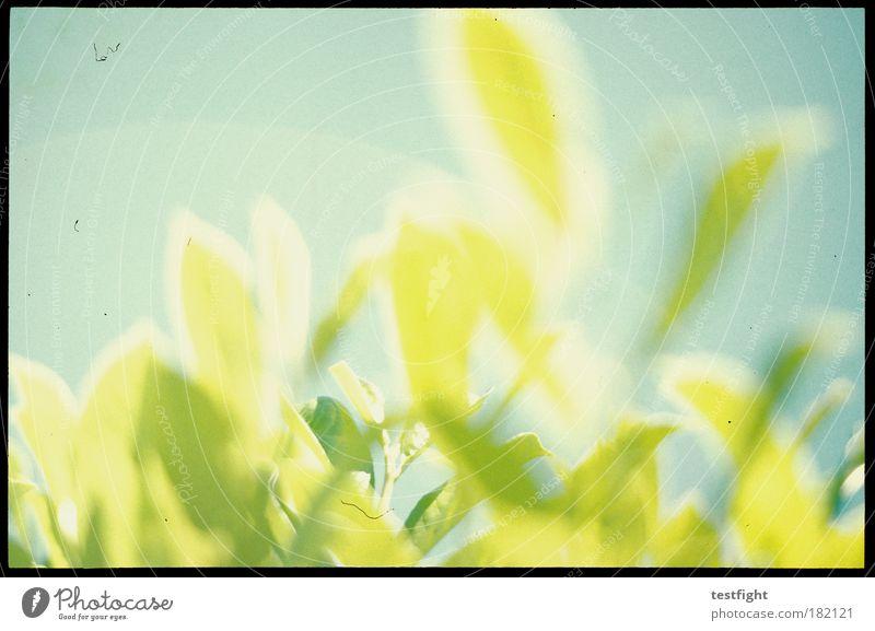 baby c´mon Natur Himmel Pflanze Sommer Freude Blatt Erholung Glück träumen Zufriedenheit Stimmung Umwelt Licht analog Blühend Schönes Wetter