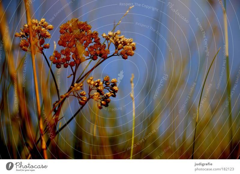 Wiese Natur schön Himmel Pflanze Sommer Blatt Blüte Gras Umwelt Wachstum wild natürlich