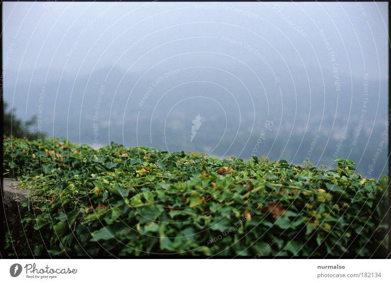 green fog Natur grün Pflanze Ferien & Urlaub & Reisen ruhig dunkel Herbst Wand Bewegung grau träumen Mauer Wege & Pfade Landschaft Angst Nebel