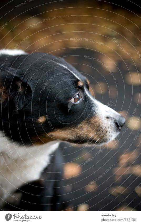 Mick Baum Blatt Tier schwarz Herbst Hund braun Nase Sicherheit bedrohlich Schutz Mut Geruch Haustier Treue Haushund