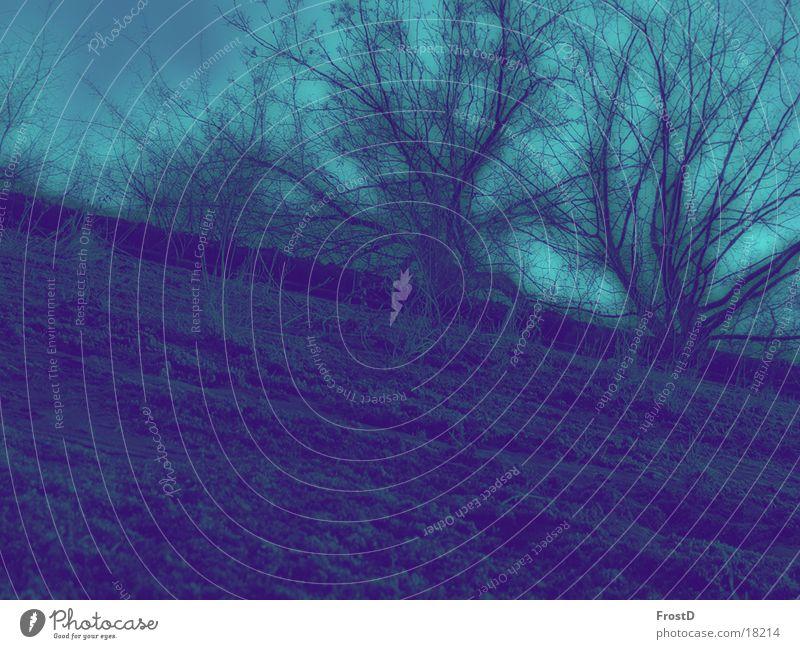 Festungsmauer Außenaufnahme Experiment Tag Design harmonisch Wohlgefühl Sinnesorgane ruhig Freiheit Umwelt Natur Landschaft Pflanze Erde Himmel Sommer