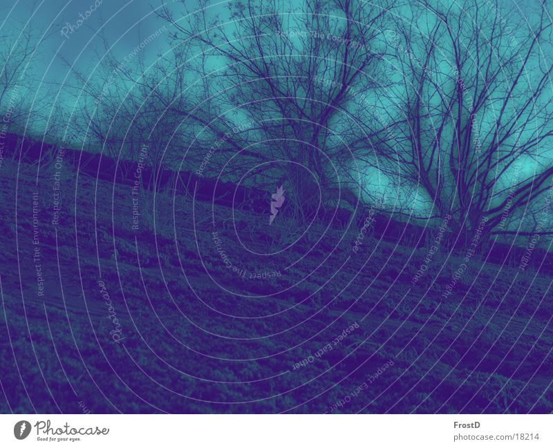 Festungsmauer Himmel Natur Baum Pflanze Sommer Einsamkeit ruhig Umwelt Landschaft Wand Freiheit Mauer Erde Angst Felsen Design