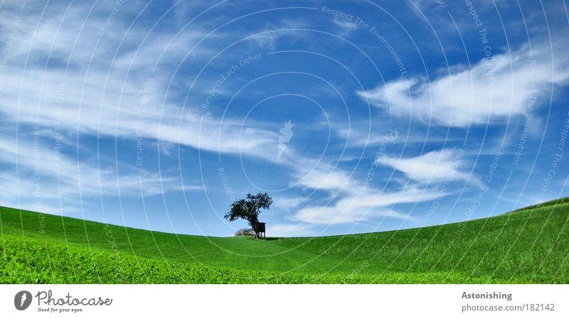 in der Mitte der Wiese.. Umwelt Natur Landschaft Luft Himmel Wolken Sommer Wetter Schönes Wetter Pflanze Baum Gras Hügel stehen Wachstum hell schön weich blau