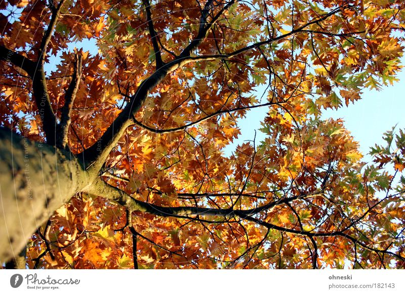 Pflichtaufgabe (by carl) Himmel Natur Baum Pflanze Sonne Blatt Umwelt Herbst Park gold natürlich Warmherzigkeit Hoffnung Schönes Wetter Glaube Sonnenlicht