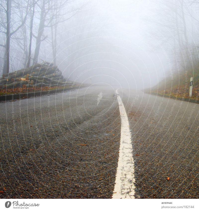 Fehlender Durchblick Baum ruhig Straße Wald Herbst grau Regen Landschaft Stimmung Straßenverkehr Nebel Schilder & Markierungen fahren Verkehrswege Autofahren