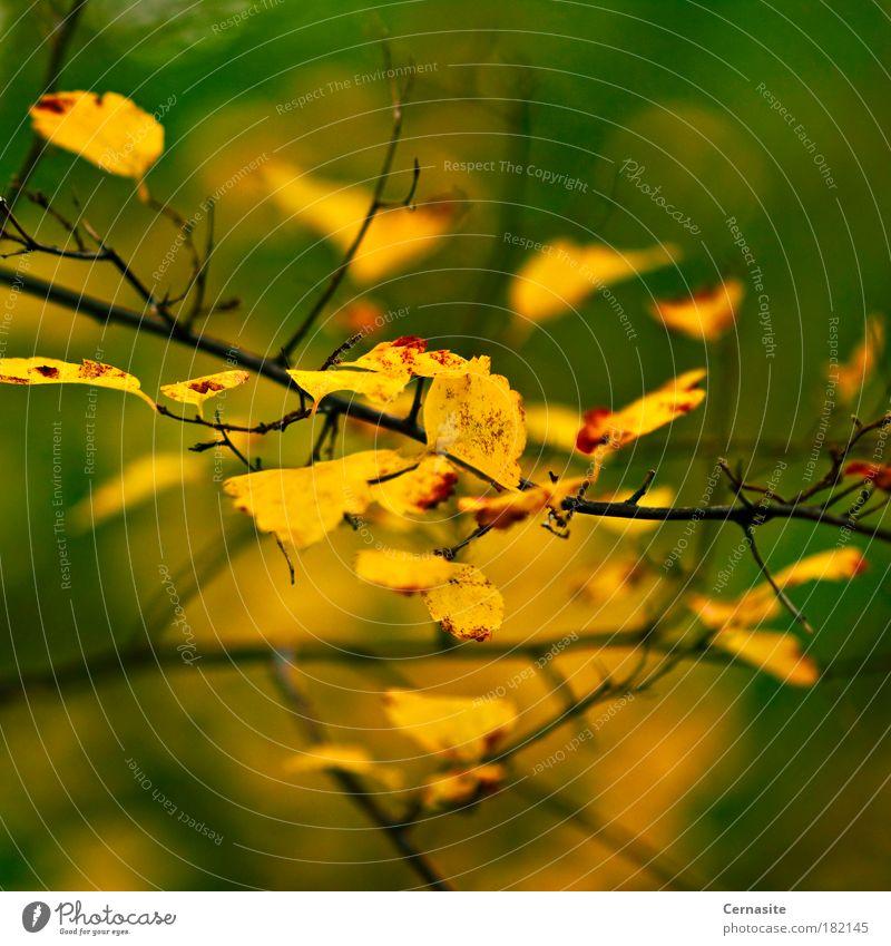 Unendliches Labyrinth Farbfoto mehrfarbig Außenaufnahme Nahaufnahme Detailaufnahme Experiment abstrakt Menschenleer Tag Licht Schatten Kontrast