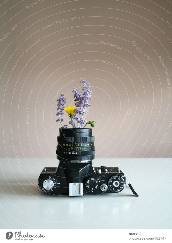 analoges Gewächs³ Farbfoto Innenaufnahme Stil Freizeit & Hobby Natur Pflanze Blume alt außergewöhnlich gelb violett schwarz weiß Fotografie Lavendel