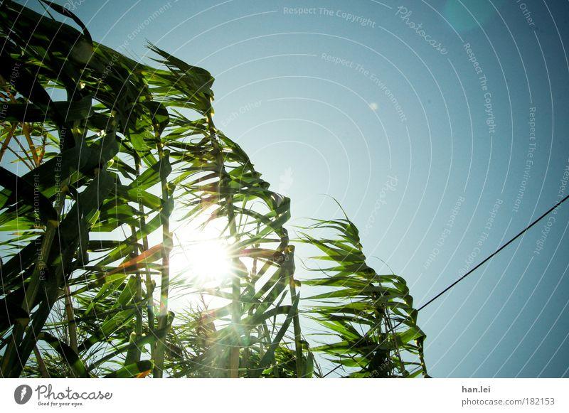 windig Natur Himmel grün blau Pflanze kalt Wärme Wind Kabel Schilfrohr Vignettierung