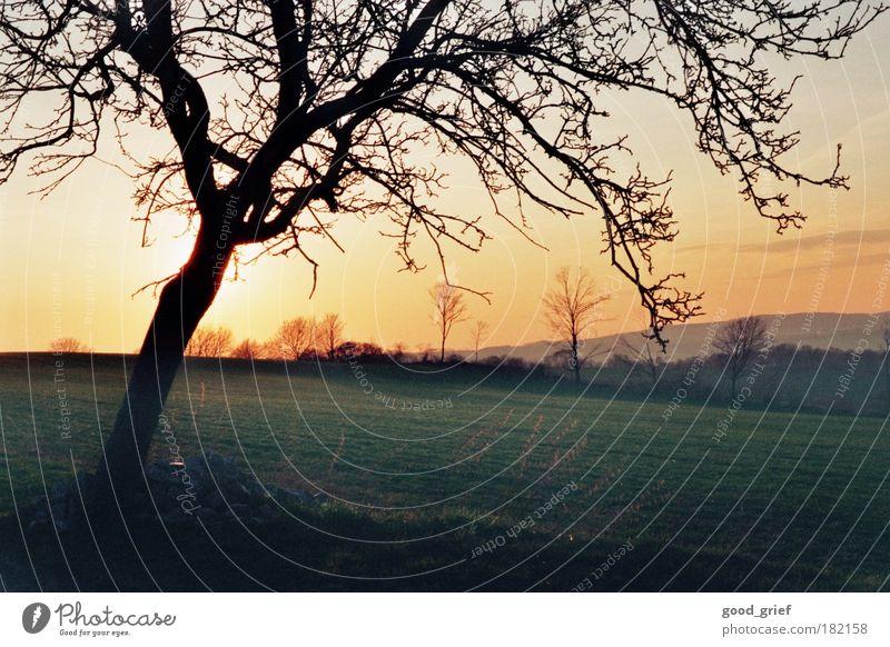 abendstimmung Natur blau grün Baum Pflanze Tier gelb Umwelt Wiese Landschaft Herbst kalt Gefühle Gras Luft Erde
