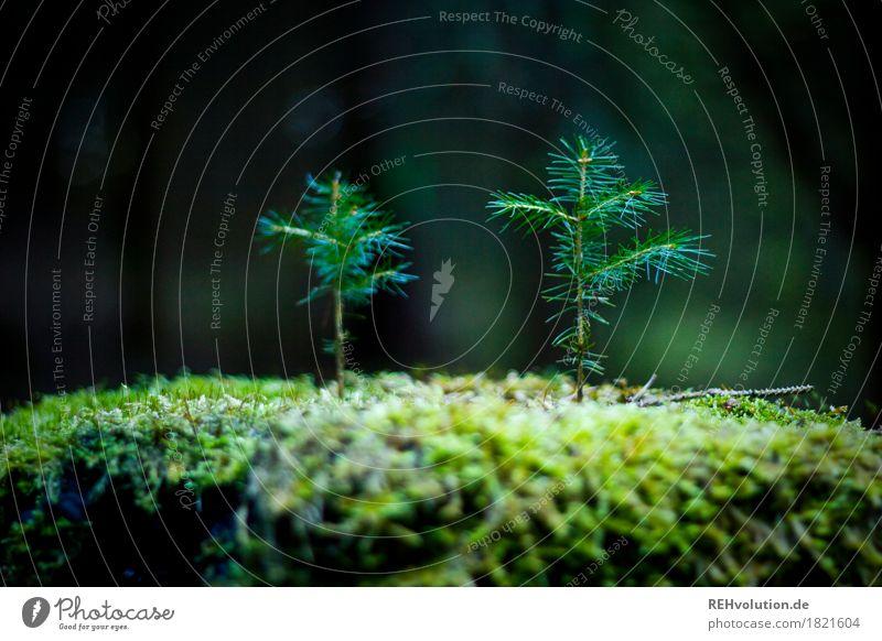 2 im Wald Umwelt Natur Pflanze Baum Moos Wachstum dünn Zusammensein klein grün Freundschaft Verantwortung achtsam Hoffnung Glaube Partnerschaft einzigartig