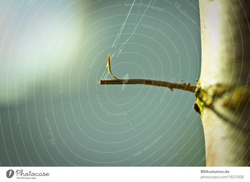Spinnweben Umwelt Natur Herbst Baum Blatt natürlich Spinnennetz minimalistisch Zweig Nähgarn Baumstamm Farbfoto Gedeckte Farben Außenaufnahme Textfreiraum links