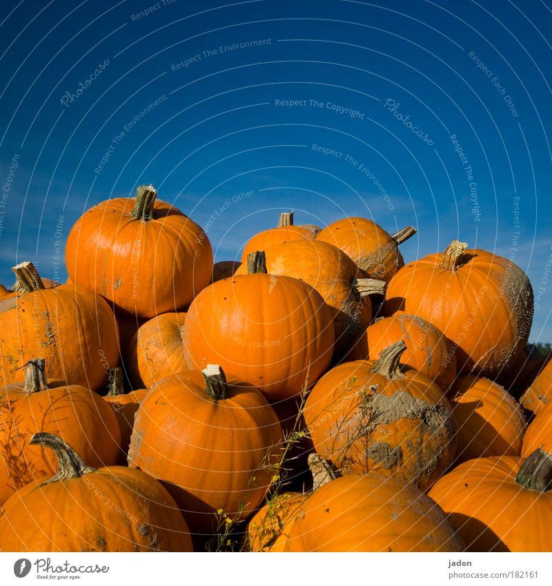 berge von gold Außenaufnahme Lebensmittel Ernährung Bioprodukte Vegetarische Ernährung Sonne Halloween Herbst Feld fest groß blau gelb Kürbis Kürbiszeit