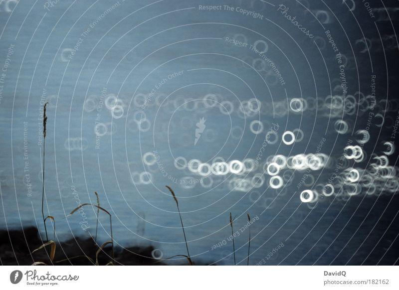 Elbufer Natur Wasser Pflanze Gras Landschaft Unschärfe Wellen Umwelt Kreis Fluss Licht Surrealismus Gegenlicht Flussufer Spiegellinsenobjektiv (Effekt)