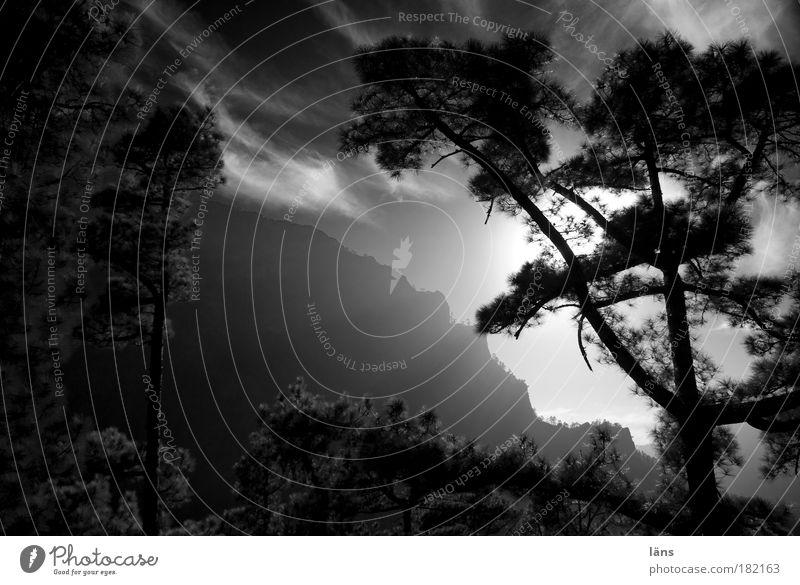 Bergwald Schwarzweißfoto Außenaufnahme Menschenleer Textfreiraum Mitte Abend Licht Schatten Kontrast Silhouette Lichterscheinung Sonnenlicht Sonnenstrahlen