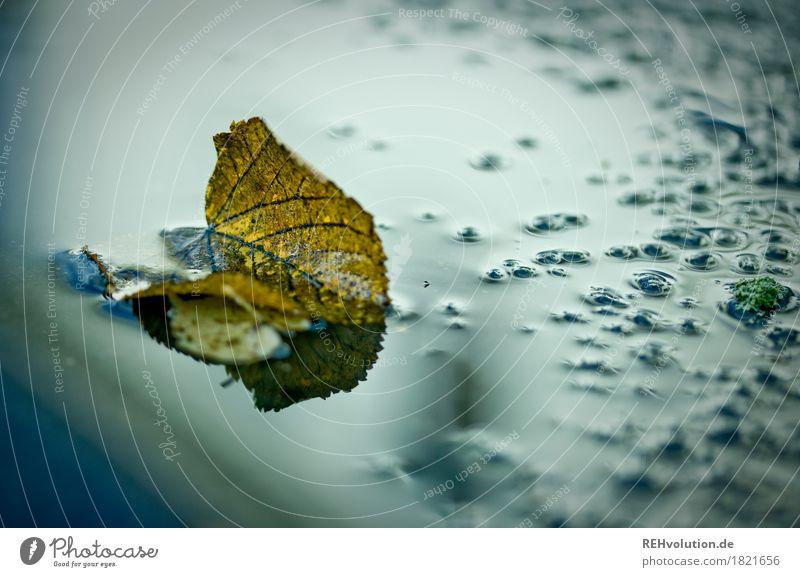 Herbst Umwelt Natur Wetter schlechtes Wetter Regen Blatt Wasser nass Pfütze feucht Farbfoto Außenaufnahme Textfreiraum rechts Morgendämmerung Tag