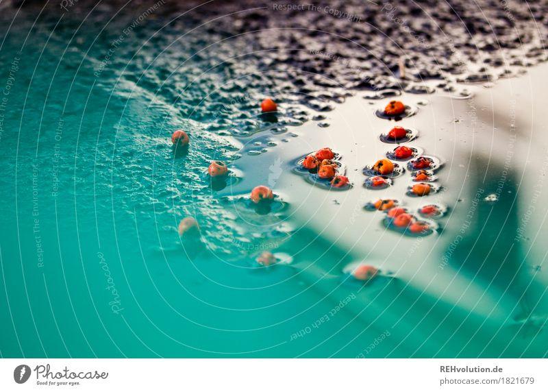 Herbst trifft türkis Wetter schlechtes Wetter Regen nass Asphalt Beeren rot Farbfoto Außenaufnahme Textfreiraum oben Textfreiraum unten Tag