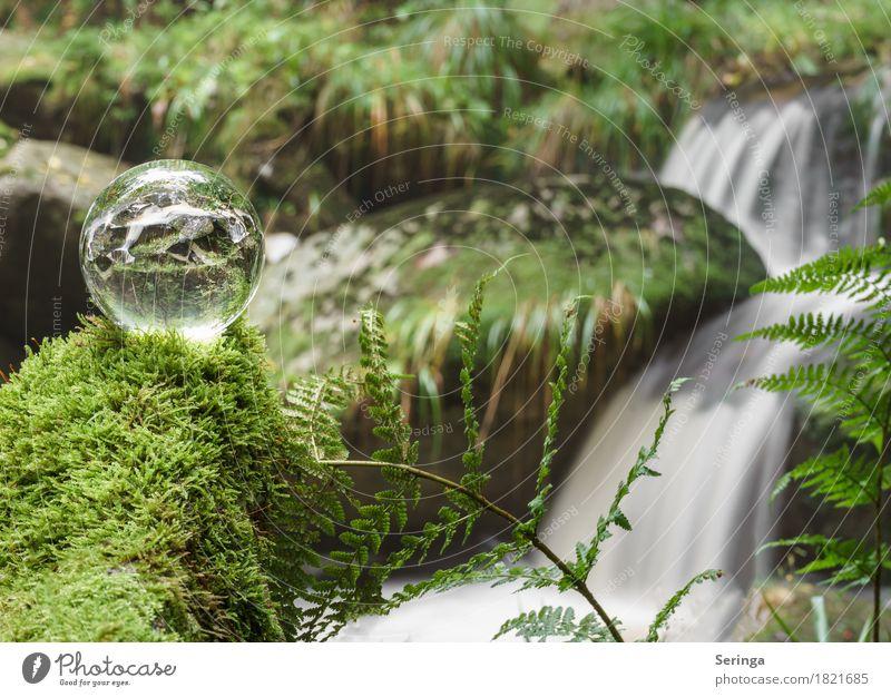 Steinerne Renne durch die Kugel Umwelt Natur Landschaft Pflanze Tier Sommer Herbst Moos Farn Flussufer See Bach Wasserfall Glas Bewegung Harz Wernigerode grün