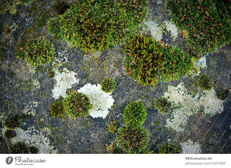 Moos Umwelt Natur Pflanze Grünpflanze Stein Beton Wachstum grün Farbfoto Gedeckte Farben Außenaufnahme Nahaufnahme Detailaufnahme Makroaufnahme