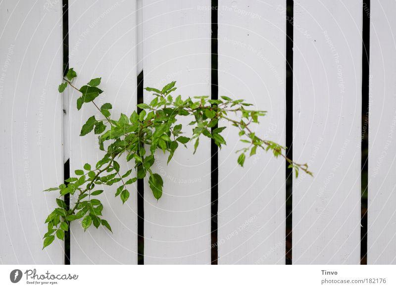 durchwachsen Natur grün Pflanze ruhig Herbst Garten Wachstum Streifen Neugier entdecken Zaun Lücke Spalte gestreift geduldig Entschlossenheit