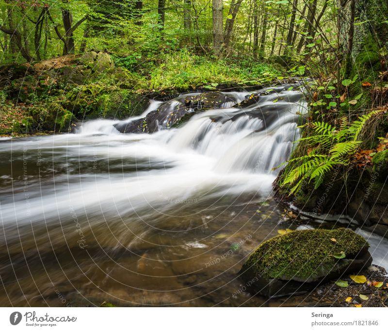 Bergab Natur Ferien & Urlaub & Reisen Pflanze Sommer Wasser Sonne Landschaft Tier Wald Umwelt Frühling Herbst Freiheit See Tourismus Freizeit & Hobby