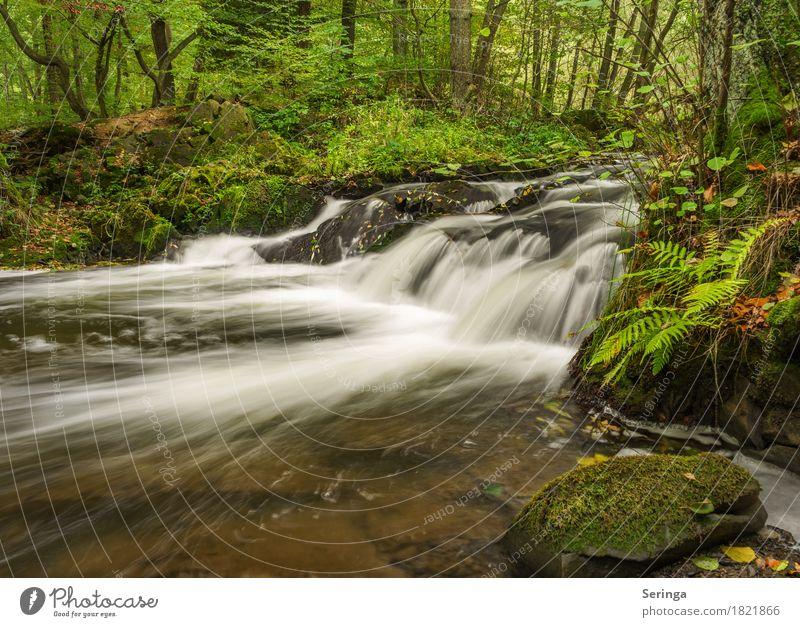 Selke Wasserfall - Harz Umwelt Natur Landschaft Pflanze Tier Sommer Herbst Flussufer Bach entdecken Erholung Wald Farbfoto mehrfarbig Außenaufnahme Menschenleer
