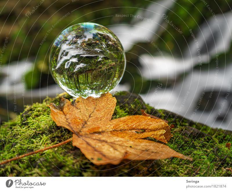 Auf dem Kopf Freizeit & Hobby Ferien & Urlaub & Reisen Ausflug Abenteuer Natur Pflanze Tier Frühling Sommer Herbst Winter Baum Moos Blatt Wald Bach Fluss