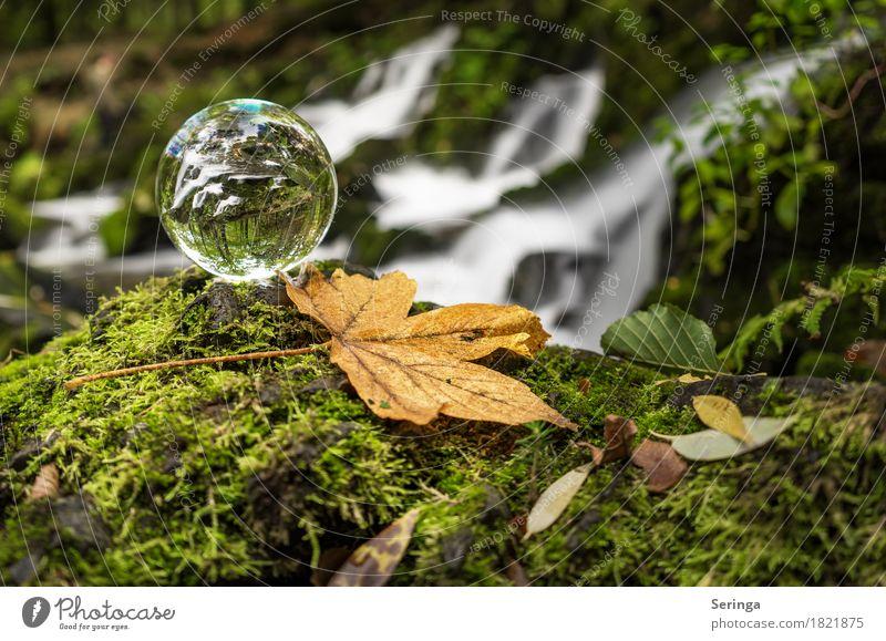 Durch das Glas Natur Landschaft Pflanze Tier Wasser Gras Moos Flussufer Wasserfall schön Glaskugel Farbfoto Gedeckte Farben mehrfarbig Außenaufnahme