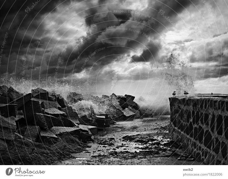 Widerstand Umwelt Natur Landschaft Urelemente Wolken Gewitterwolken Herbst schlechtes Wetter Wind Sturm Sassnitz Mauer Wand Stein außergewöhnlich dunkel