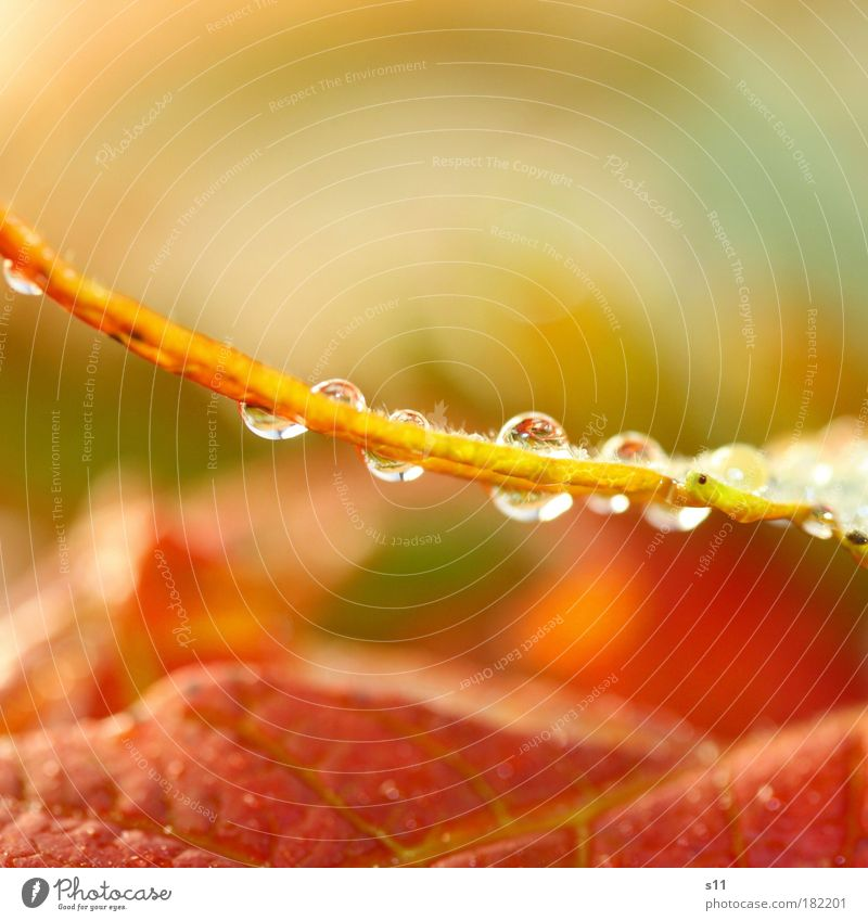 Herbststimmung Natur schön rot Blatt Umwelt Glück klein hell Park Stimmung Kraft gold glänzend natürlich elegant