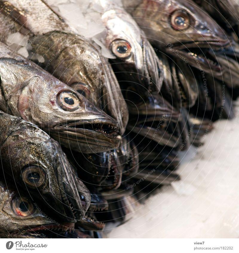 reichlich Tier dunkel liegen Angst Lebensmittel Ordnung nass Ernährung Tiergruppe Fisch trist gruselig fangen skurril Stress